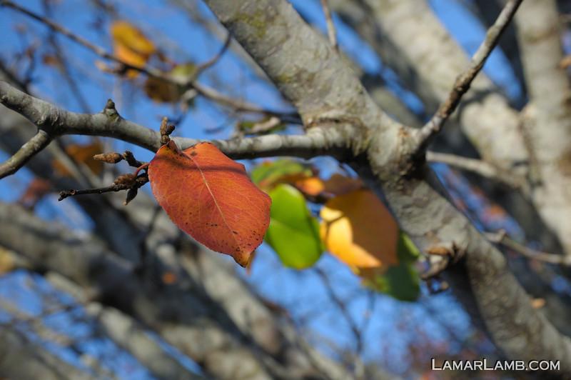Sigma 17-50mm f/2.8 EX DC OS HSM @ 50mm f/5.6: Focused on orange leaf.