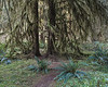 Hoh Rain Forest - 1