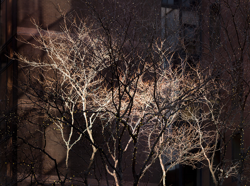 Manhattan Trees 2016