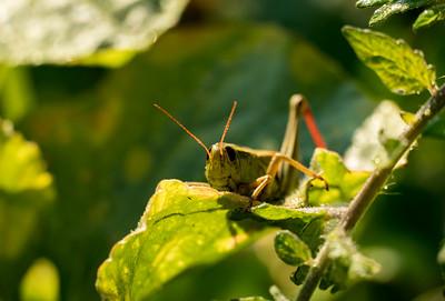 Cricket in the sun