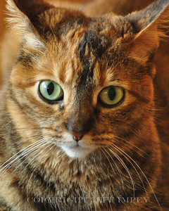 Zoomed in on  my cat. For the photographers out there, it was taken with a Nikon D90 and 18-200mm VR lens at ISO 3200.