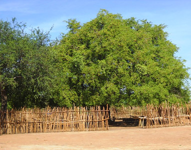 The fenced-in area, some miles away from Thiou, where Bol attended school before he fled from Sudan's civil war. The space is now a church.