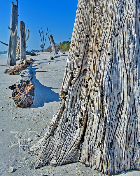 Driftwood Delight - Lover's Key, FL