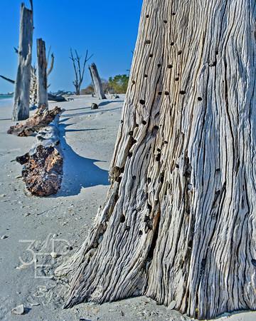 Driftwood Delight - Lover's Key, FL
