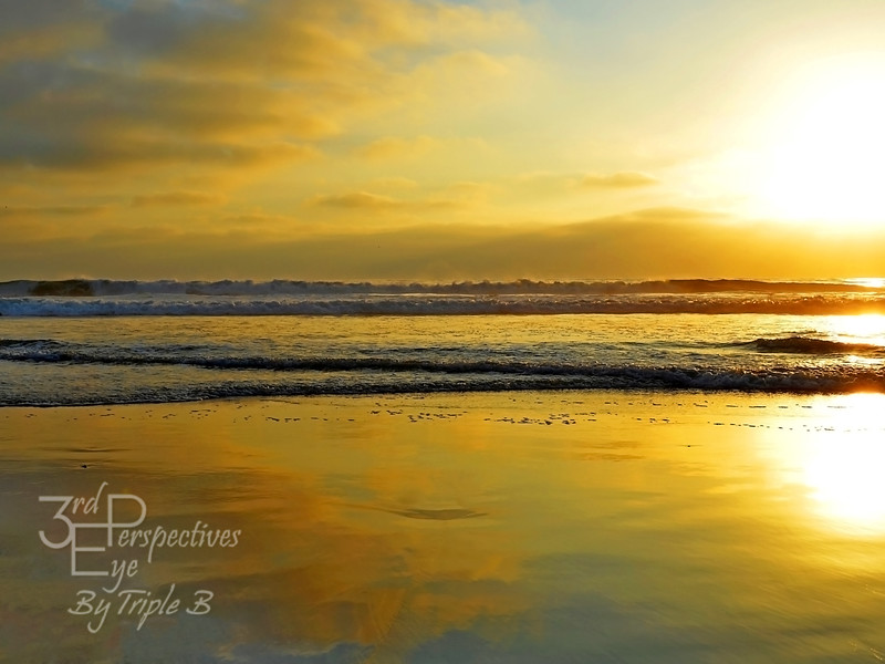 Golden Glory - Mission Beach, CA