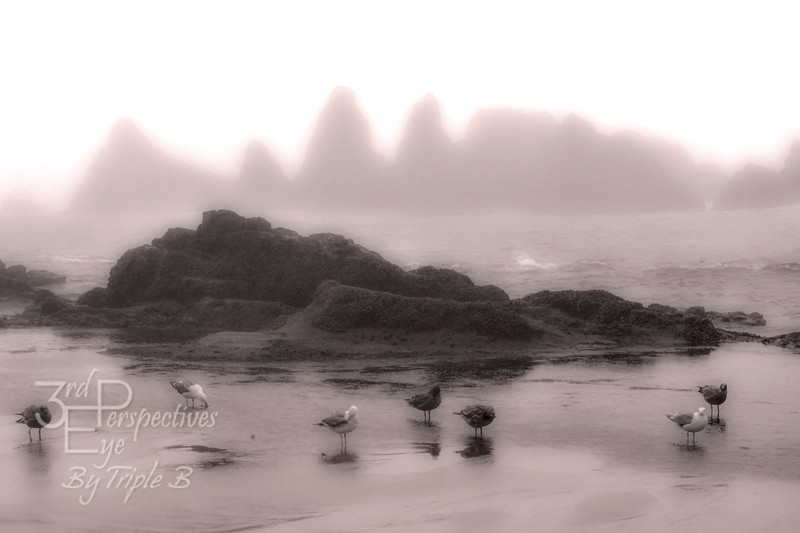 Gray Day - Seal Rock, Oregon - USA
