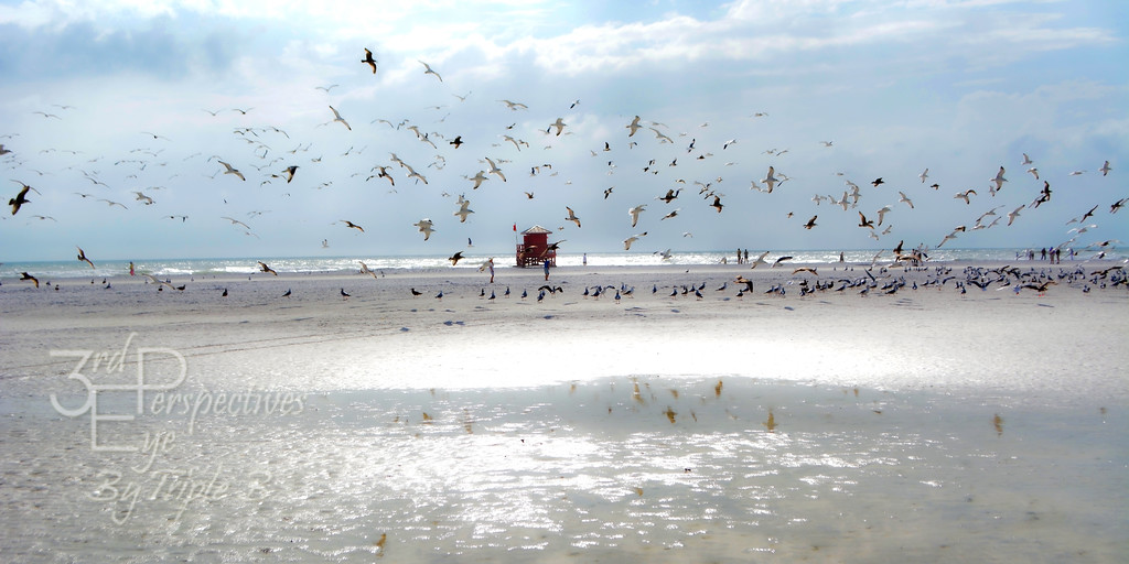 Flock of Seagulls - Siesta Key, FL