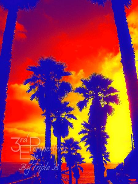 Retro Palms - Encinitas, CA