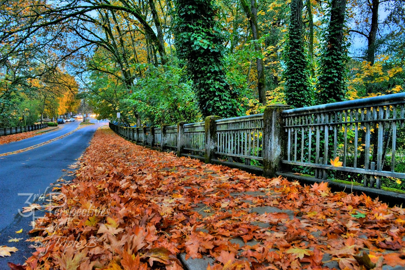 Urban Awe in the Fall - Salem, Oregon - USA
