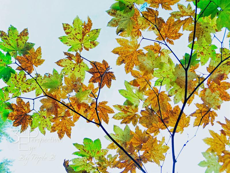 Autumn Spectrum - Oregon, USA