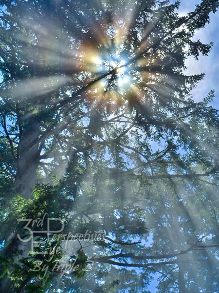 Mystical Experience - Oregon Coast - USA