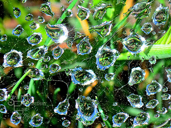 Drops of Reflection - Temecula, CA