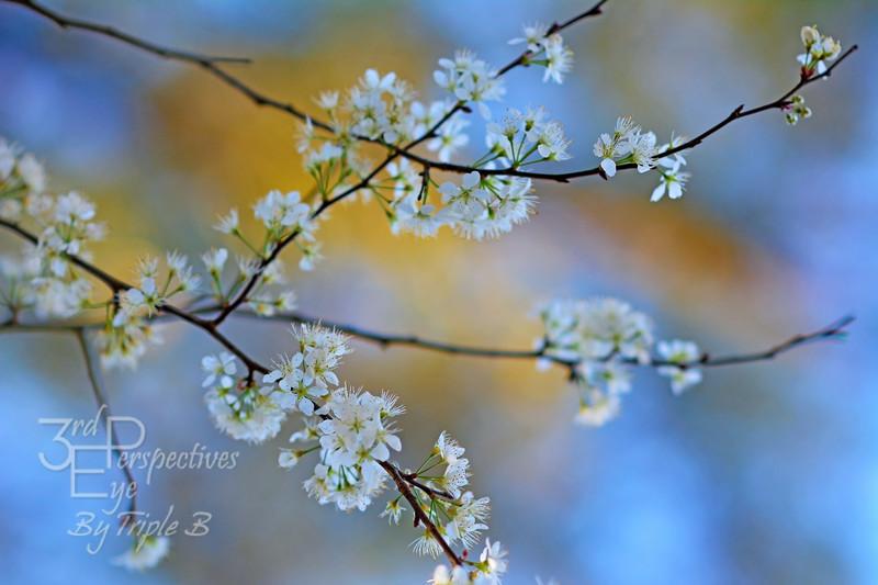 Springtime Trust - Ichetucknee, Florida - USA