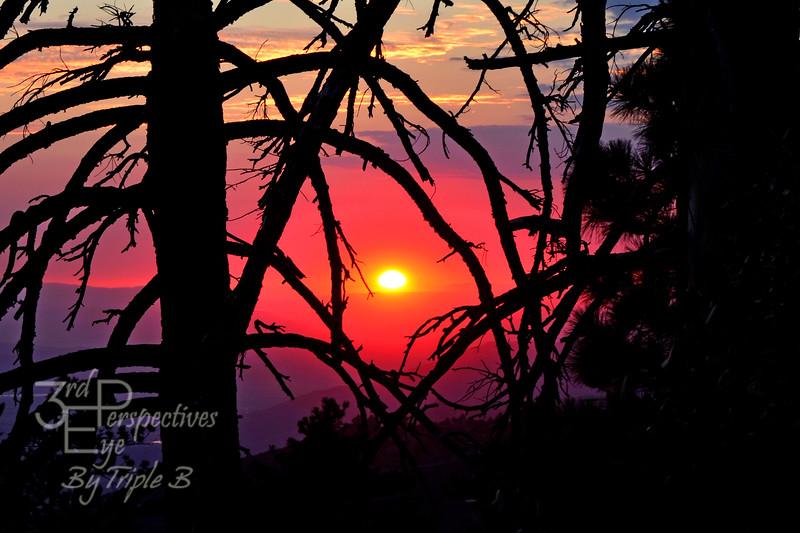 Through The Pines - Idyllwild, CA