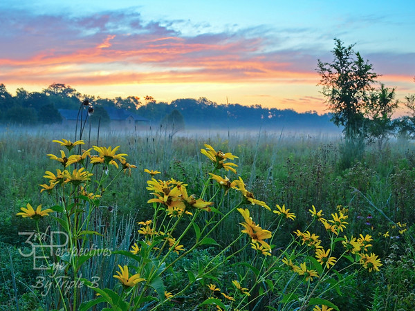 Summer Sanctuary Sunrise - Dayton, Ohio - USA