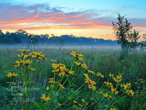 Summer Sanctuary Sunrise - Dayton, Ohio - USA