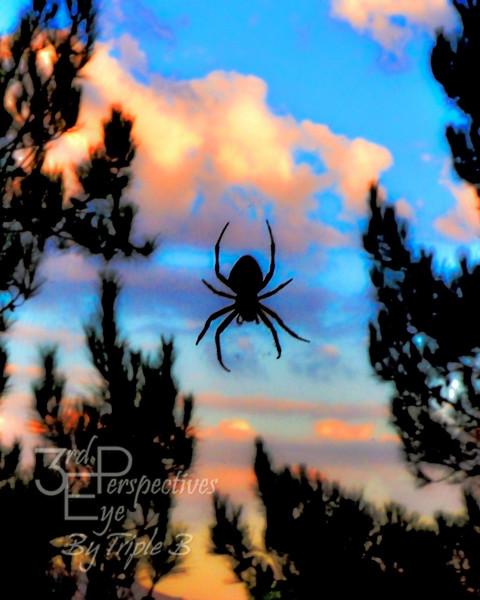 Unexpected Beauty - Temecula, California - USA