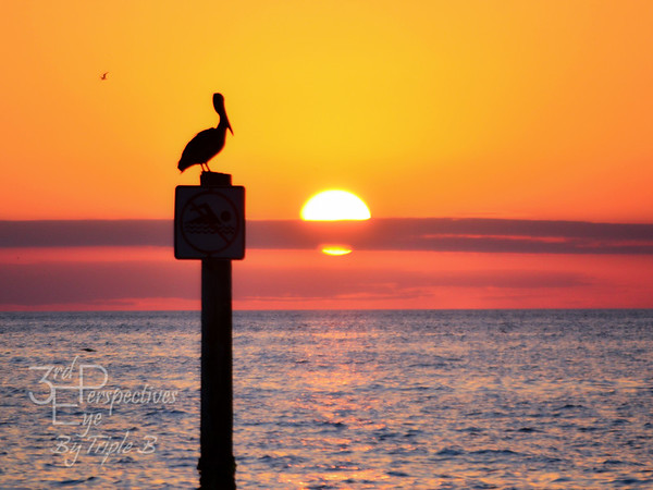 Gulf Coast Enchantment - Clearwater, Florida - USA