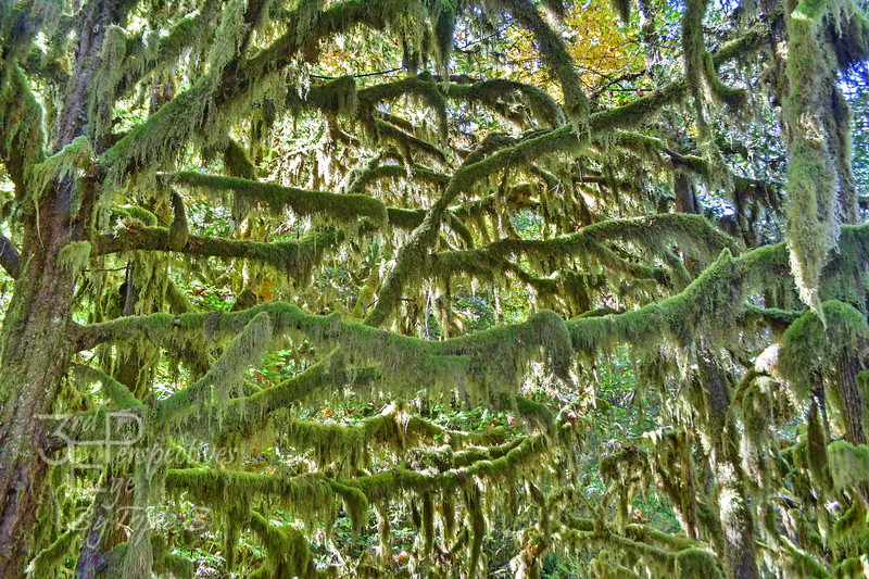 Mossy Maze - Elkhorn Valley, Oregon - USA
