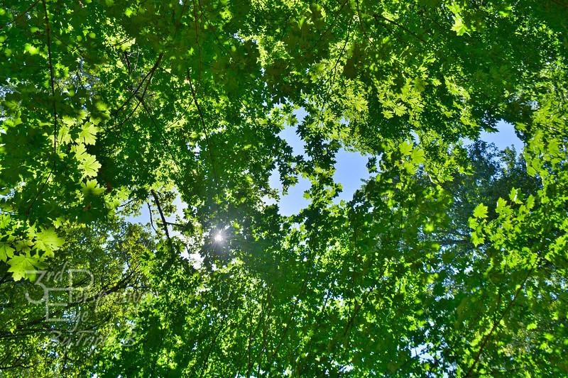 Luminous Look Up - Salem, Oregon - USA