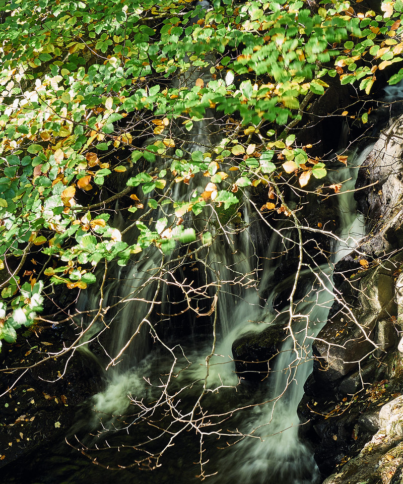 Leaves and water at Dobgill