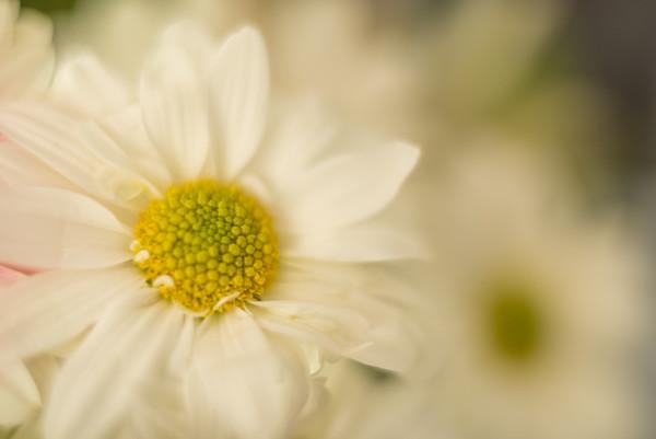 Flower Vibrance