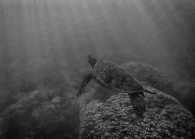 Vintage Turtle Sighting