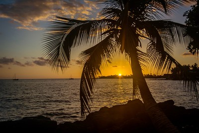 Palm Tree Sunset Bay
