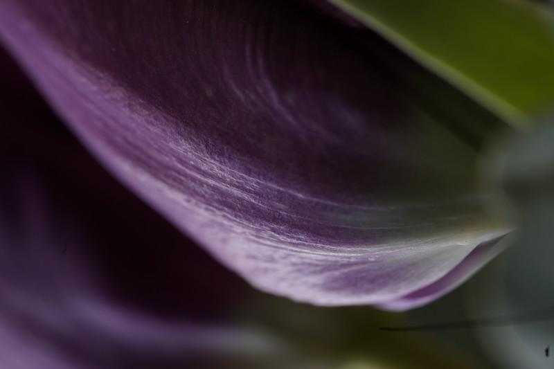 Light the Tulip