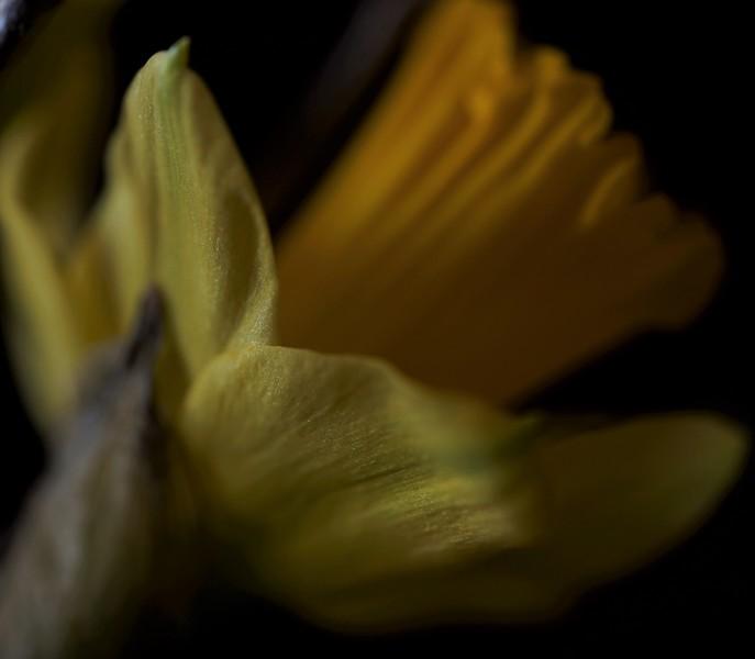 Local Market Cut-Stem Flowers