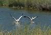 Colorado Pelican Lifestyle