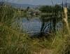 Path to a Pond