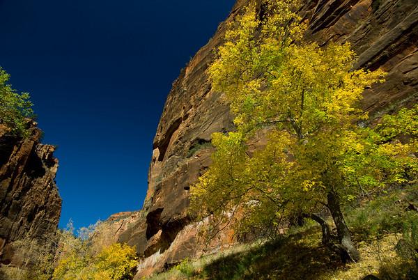 Zion Natl Park - Utah-7