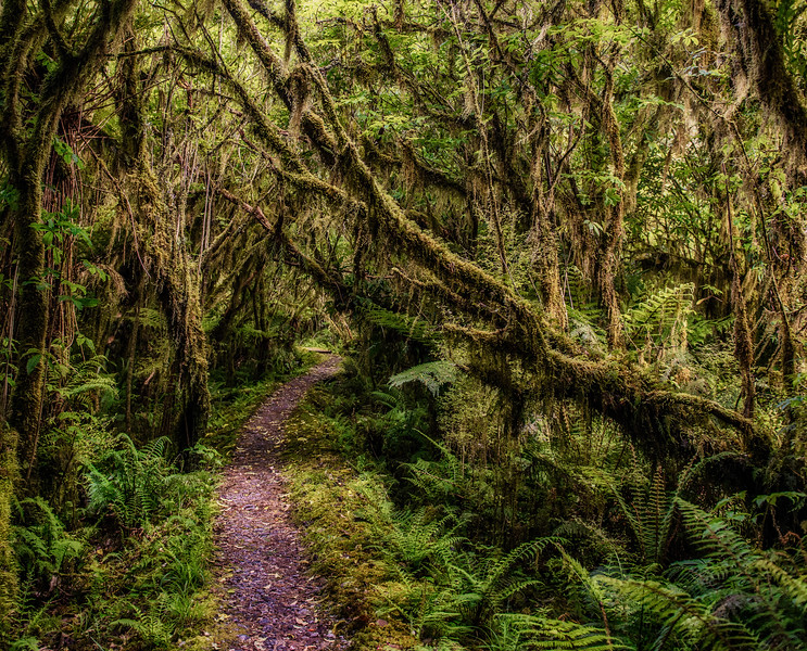 Path in the Rainforest