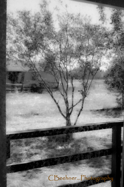 A shot looking out of the screened porch, thru the screen...focus on the screen...