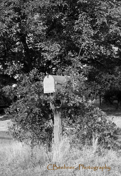 Welcome...  The mail box and news paper box (just below the mail box) have been over taken by a small oak...