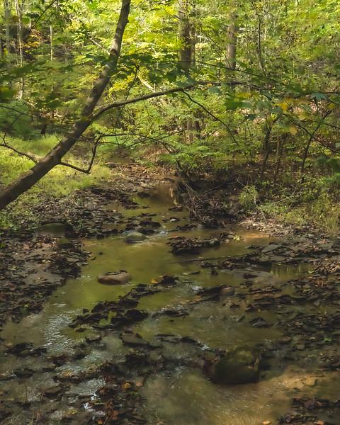 Big Walnut Nature Preserve in Bainbridge Indiana