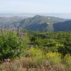 view of Calabasas Peak from Saddle Peak