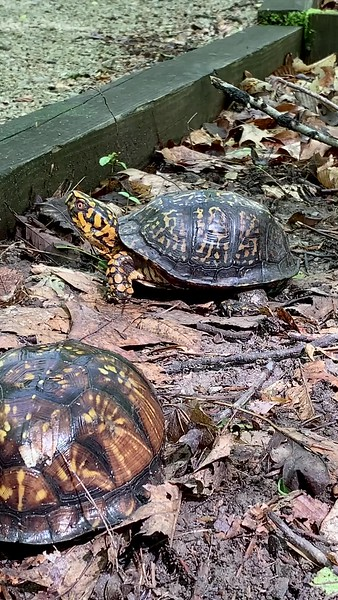 Turtle Friend at Lincoln Trail State Park in Marshall Illinois