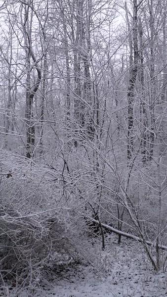 Sheltucky Woods