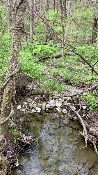 A stream at Shakamak State Park