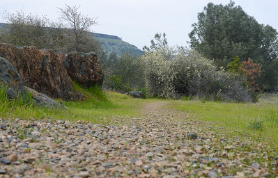 A view of the Sewim Bo River Trail in Oroville on Tuesday, March 19. (Matt Bates -- Enterprise-Record)