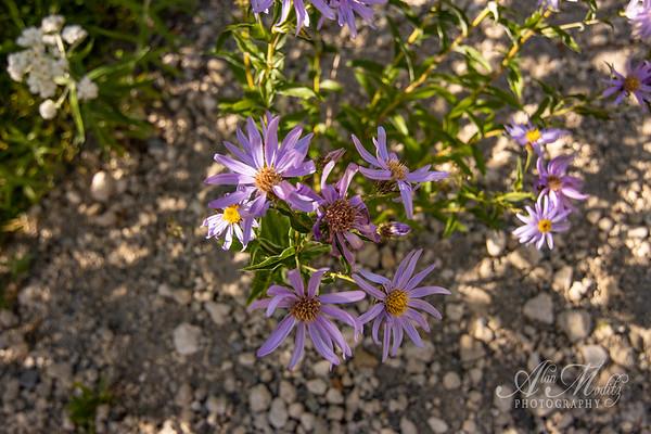 Flowers at Spirit Lake