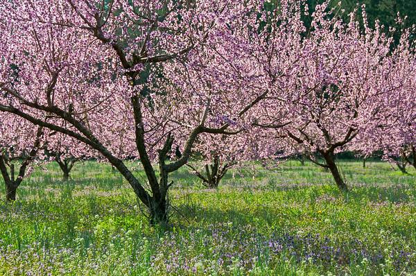 Thomas Orchards