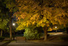 Under The Golden Maple (#0320)