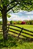 Spring Field (#0254)