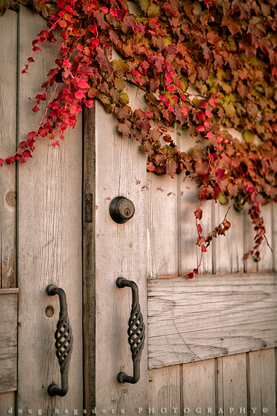 Ivy Covered Door (#0219)