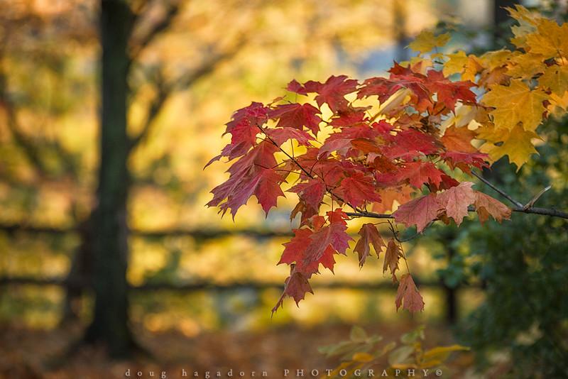 An Autumn Moment (#0477)