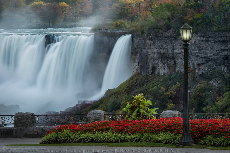 Last of the Summer Flowers at Niagara Falls (#0467)
