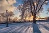 Winter Shine (#0241)